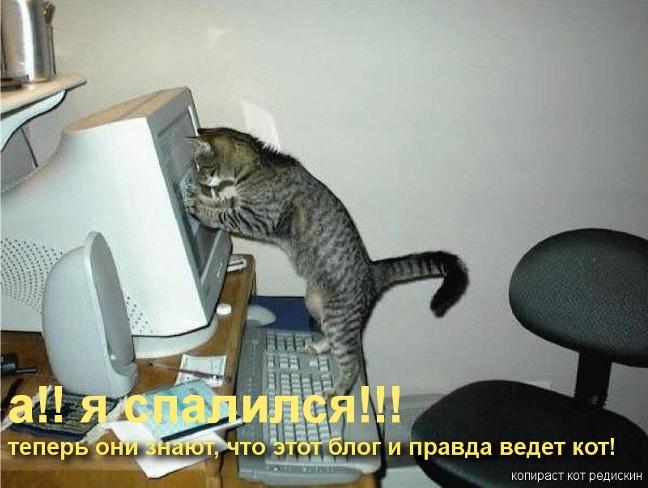 Котоматрица: Я спалился, теперь они знают, что этот блог и правда ведет кот!