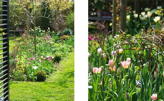 Tulipaner i afstemte farver pryder forårshaven
