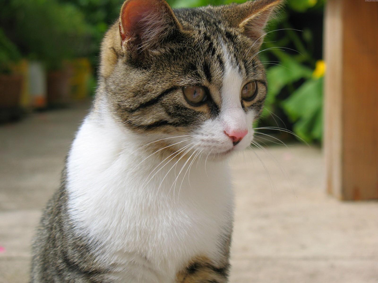 borla cat back exhaust