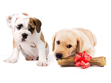 Will My Dog Get Jealous New Puppy