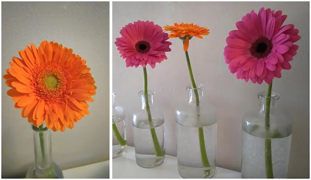 germini, gerbera, fleur, bullelodie