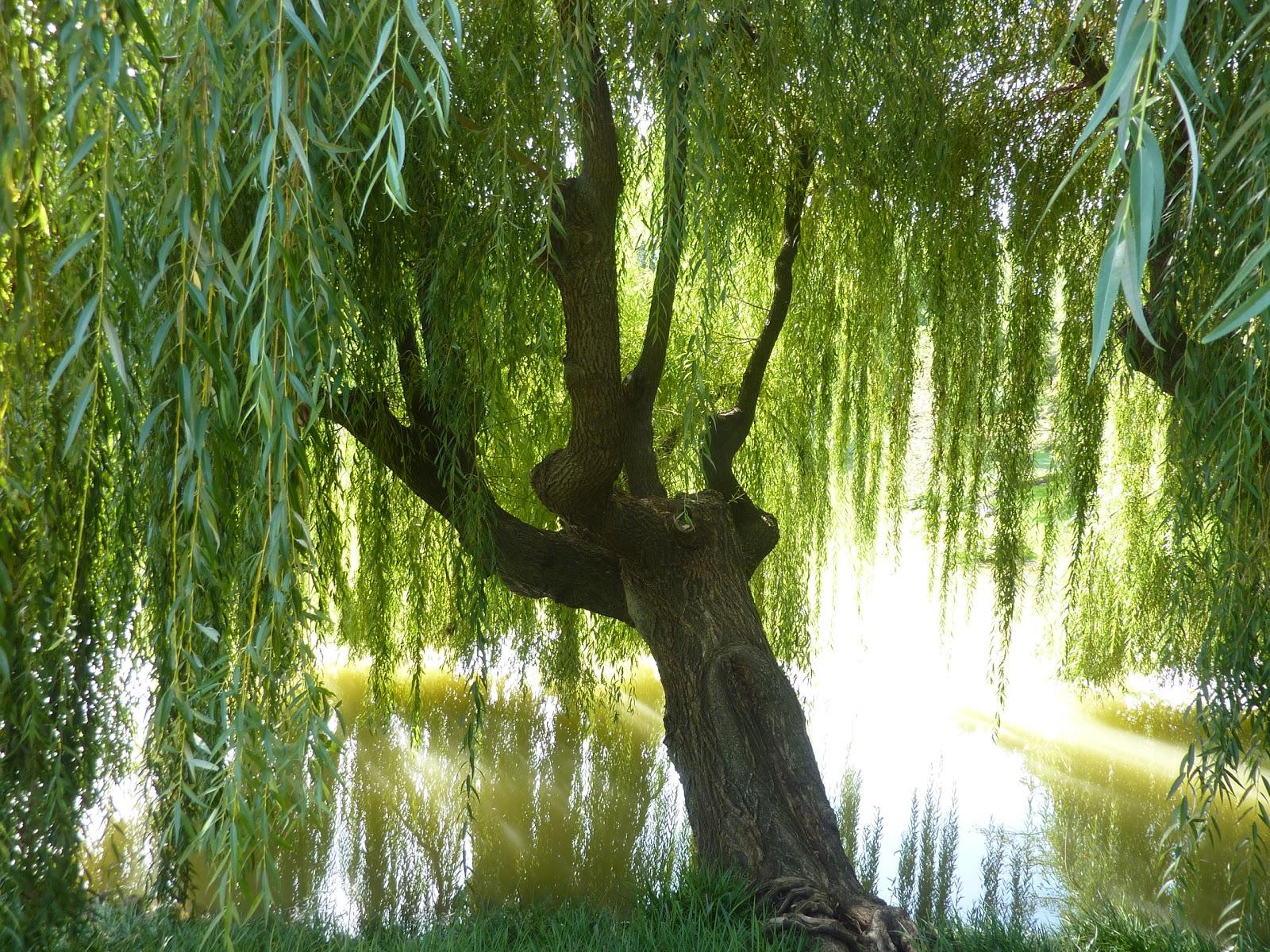 Garden Of Reflection August 2012