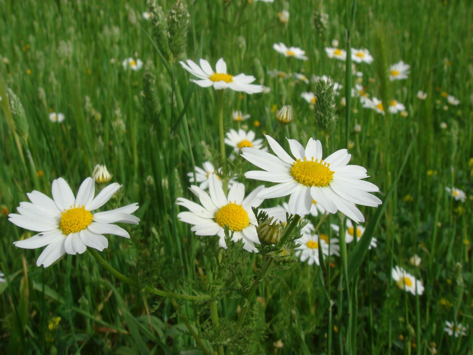 http://3.bp.blogspot.com/-wg5GZSoJJ9k/T6O75ZXHzaI/AAAAAAAAARU/Pb3yZlIYsQc/s1600/spring-flowers-wallpapers_5423_1600.jpg