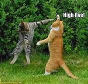 A HIGH FIVE!