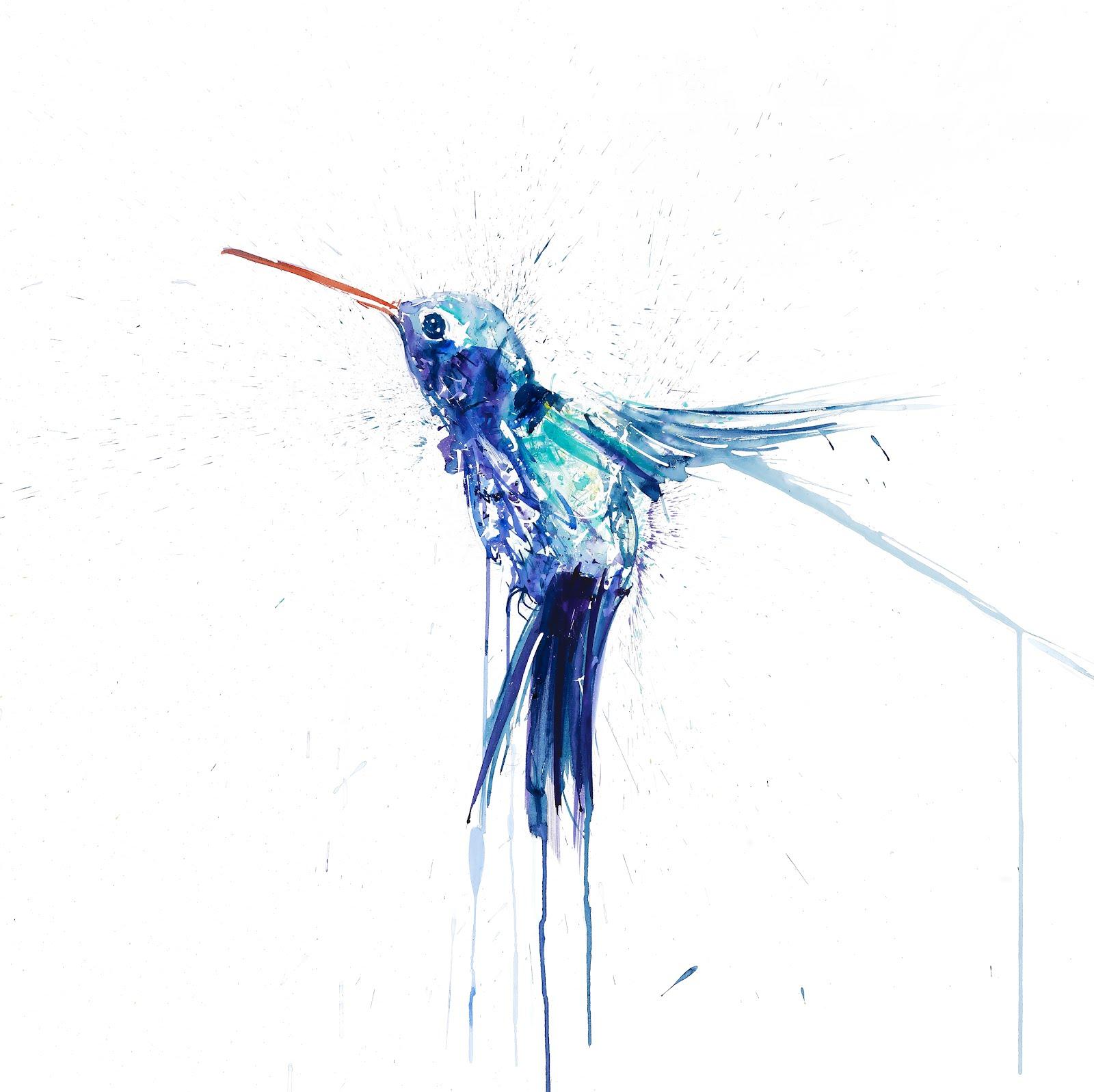new print by dave white humming bird i humming bird ii