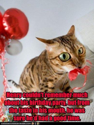 Cats having a birthday party lol