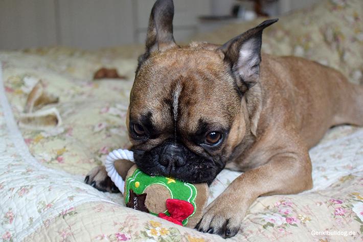 Spielzeug zu Weihnachten für Hunde