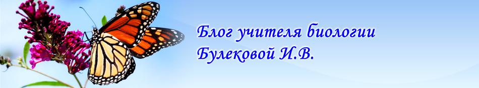 Блог учителя биологии Булековой Ирины Викторовны