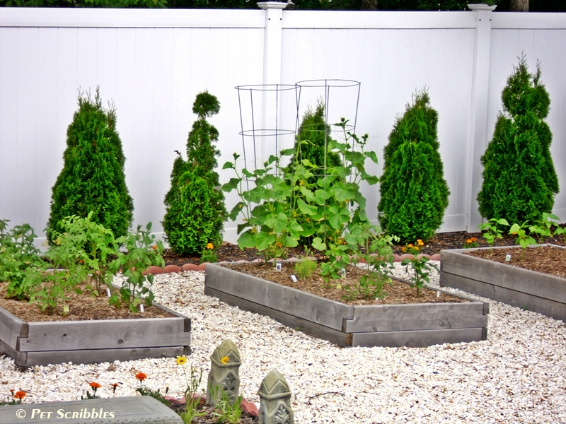 Our raised cedar beds for vegetables | Pet Scribbles