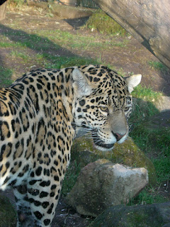 ملف كامل عن اجمل واروع الصور للحيوانات  المفترسة   حيوانات الغابة  510329335_0720afe606