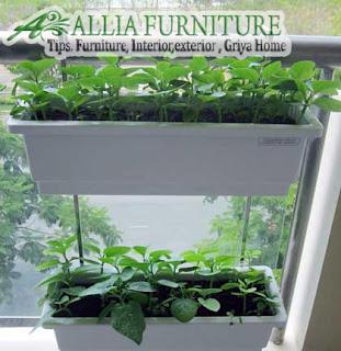 model gantung tanaman sayuran di rumah