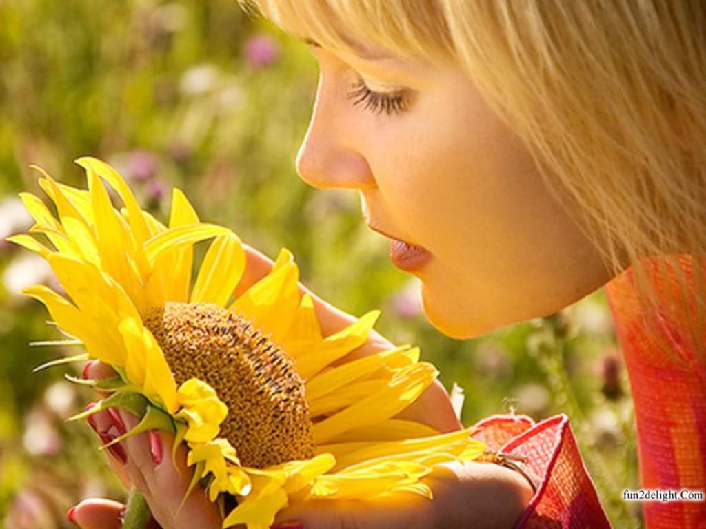 http://3.bp.blogspot.com/-whYiu2bjXK8/UMBebbpNKCI/AAAAAAAA4Qw/vHmdOo-k4SU/s1600/sun-flowers-wallpapers-images-pictures-fun2delight.com-999956.jpg
