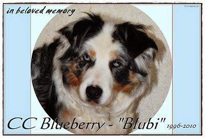 CC Blueberry