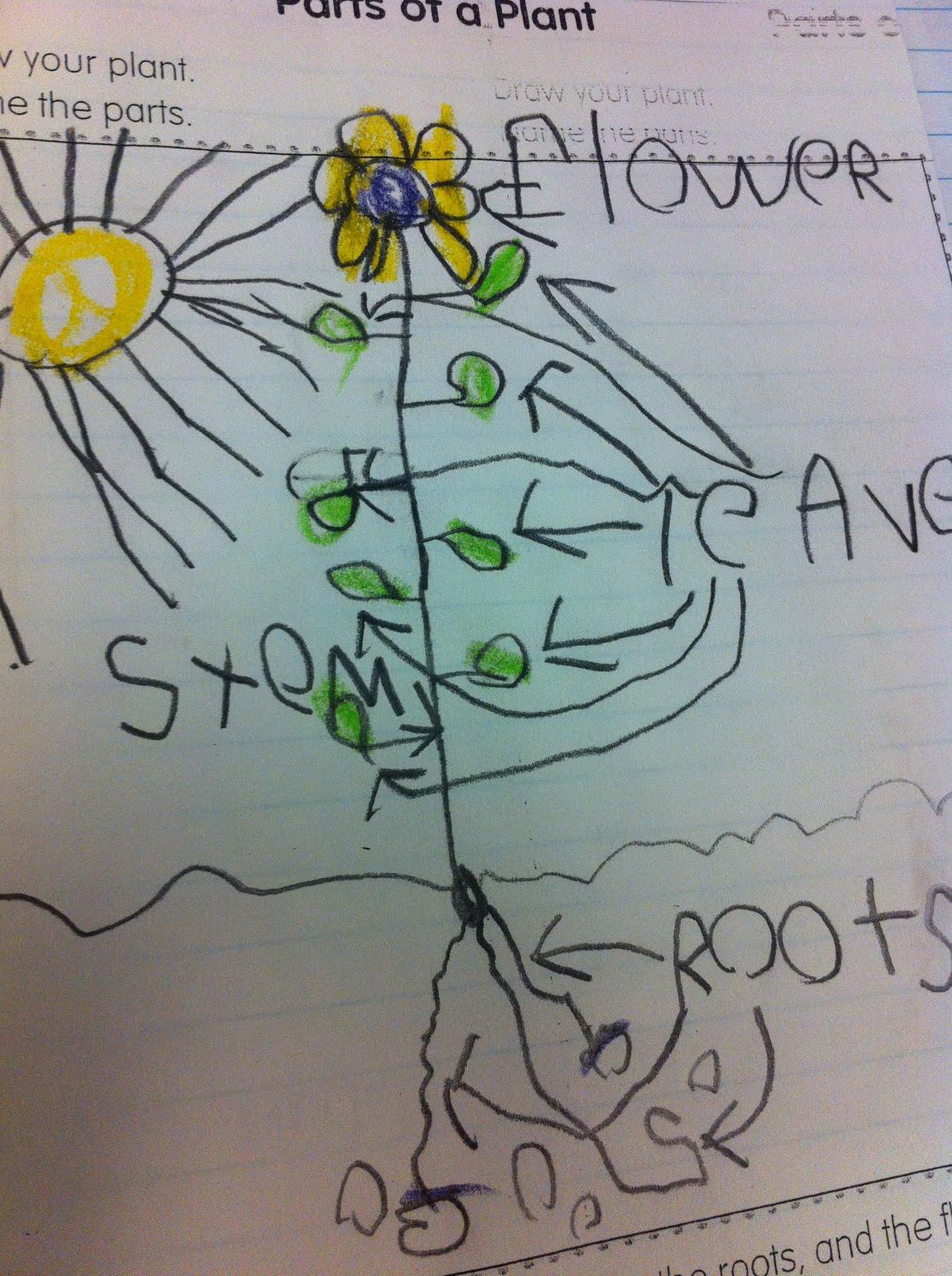 The Adventures Of A K  1 Teacher  Plants Mania