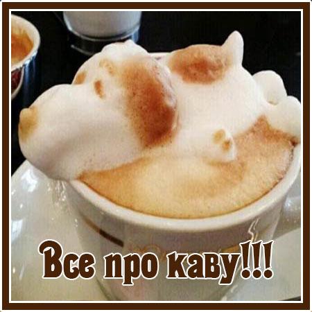 Все про каву!!!
