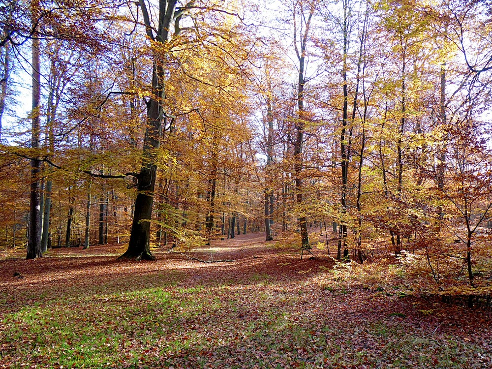 photo of Liepnitzsee in Autumn by Andie Gilmour