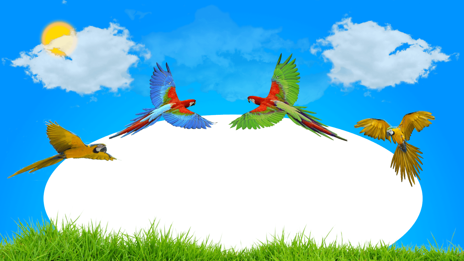 Moldura Primavera - Papagaios png