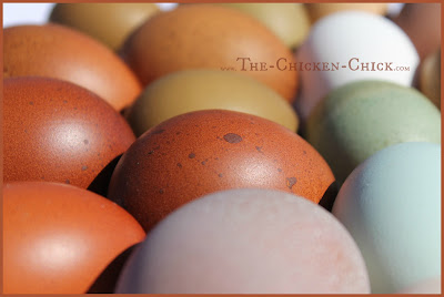 Egg irregularities from backyard chickens are very common. The occasional strange-looking egg from a hen is to be expected.