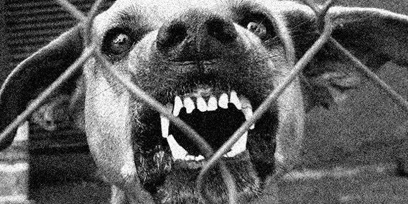 Apocalipsis Zombie: Una posibilidad, dice científico Dog-with-rabies