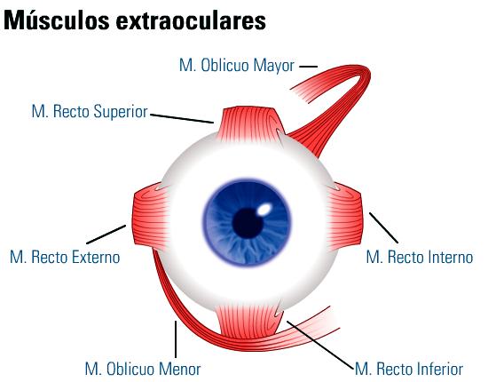 Oftalmología en Tecnología Médica: Dinámica ocular