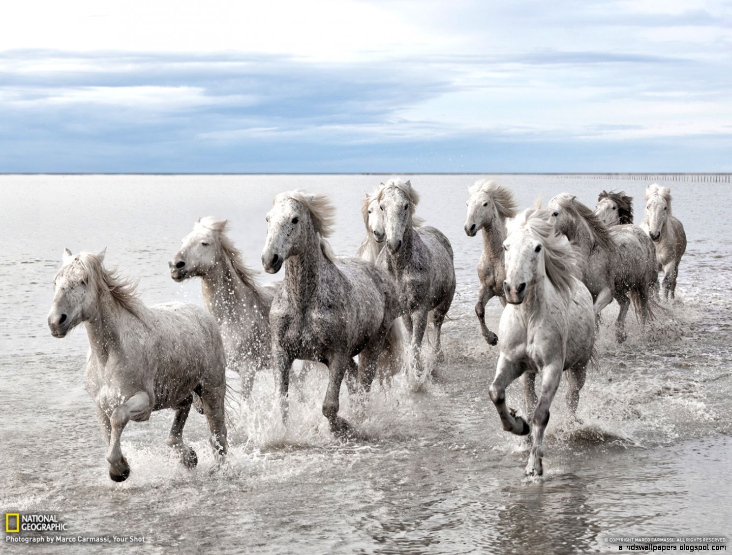 Beautiful   Wallpaper Horse National Geographic - national-geographic-wild-horses  Picture_206632.jpg