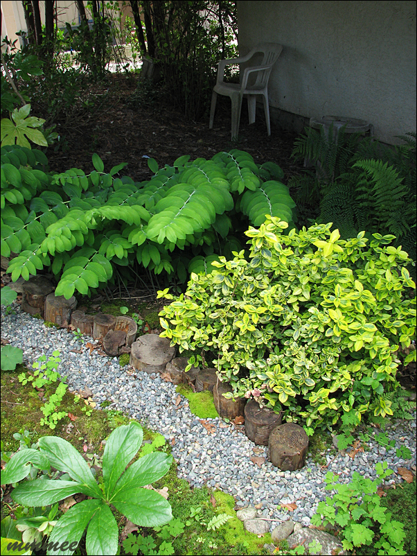 What Plants Will Grow Under A Deck : And other deep shade plants to grow under the deck