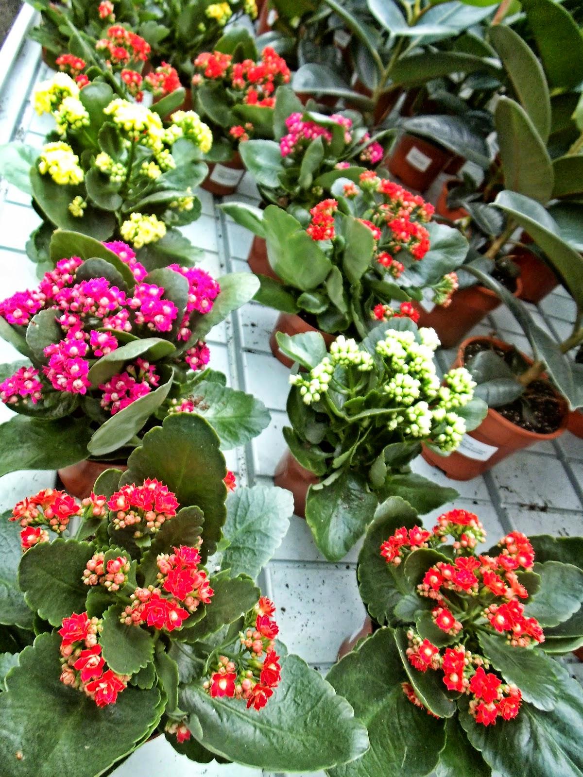 Como cuidar das suas flores e plantas for Como cuidar las plantas