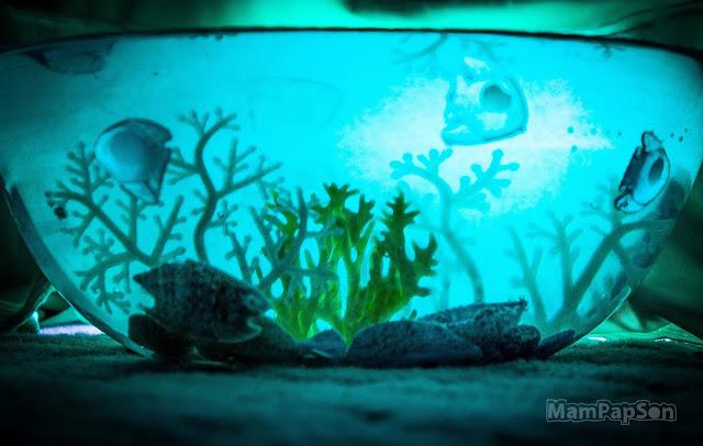 подводный мир в стеклянной миске