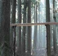 Lesní xylofon