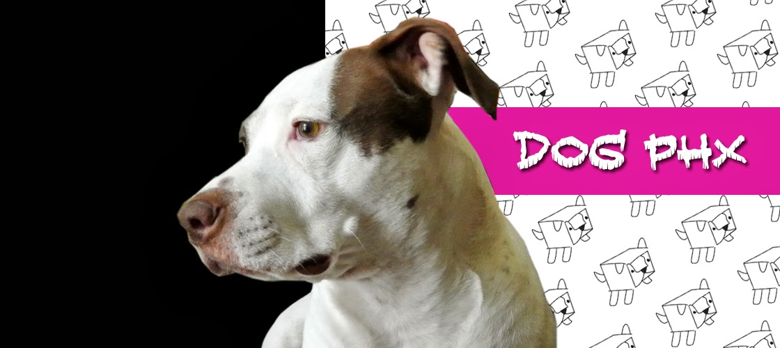 dogphx