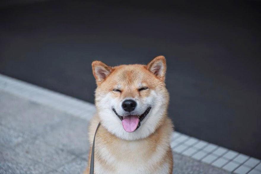el perro mas sonriente del mundo