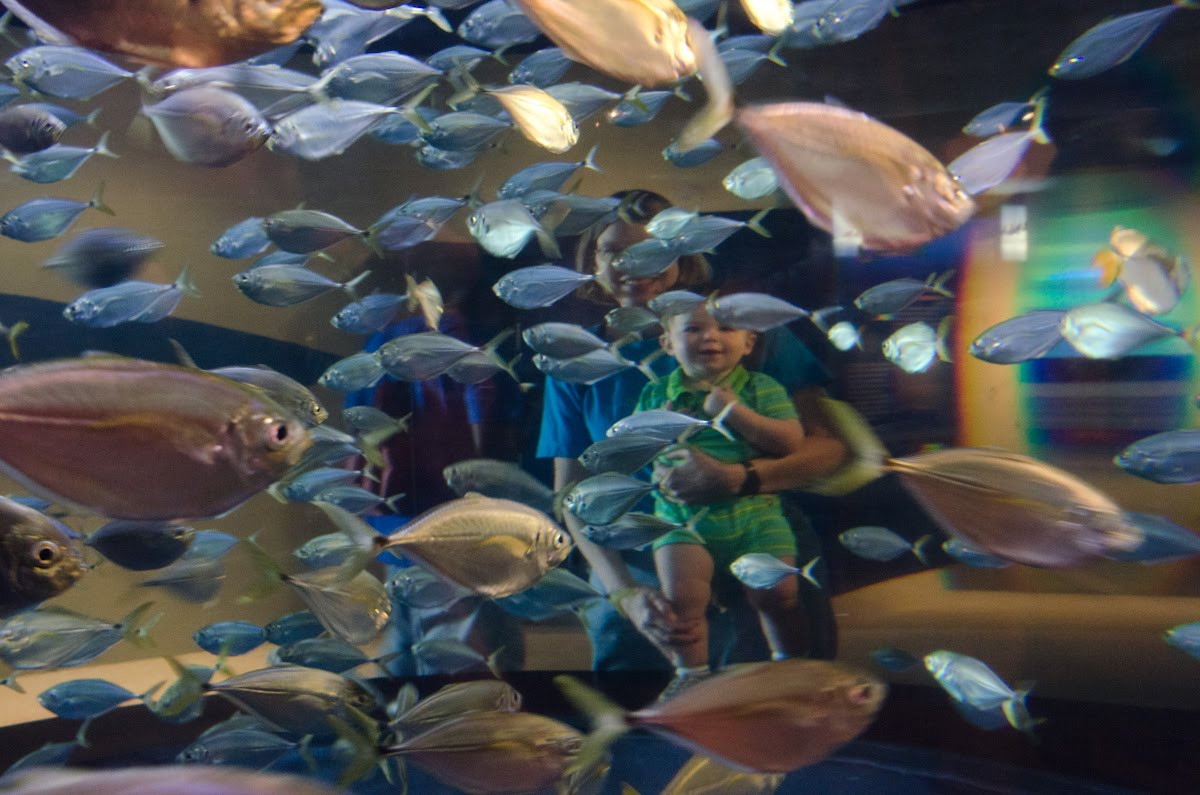 Aquarium Thru the Eyes of a Child