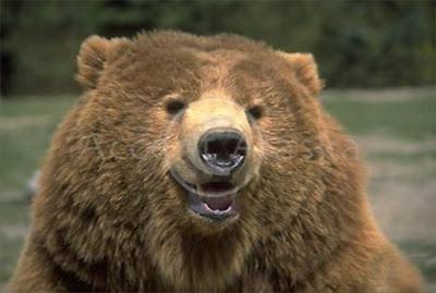 oso+riendo Imagenes chistosas de animales...