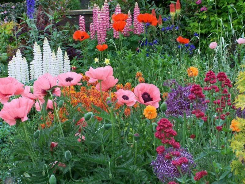 English Country Garden Plants The Image