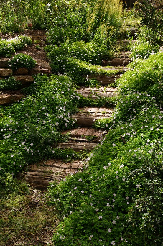 Voorbeeld trap van boomstammen