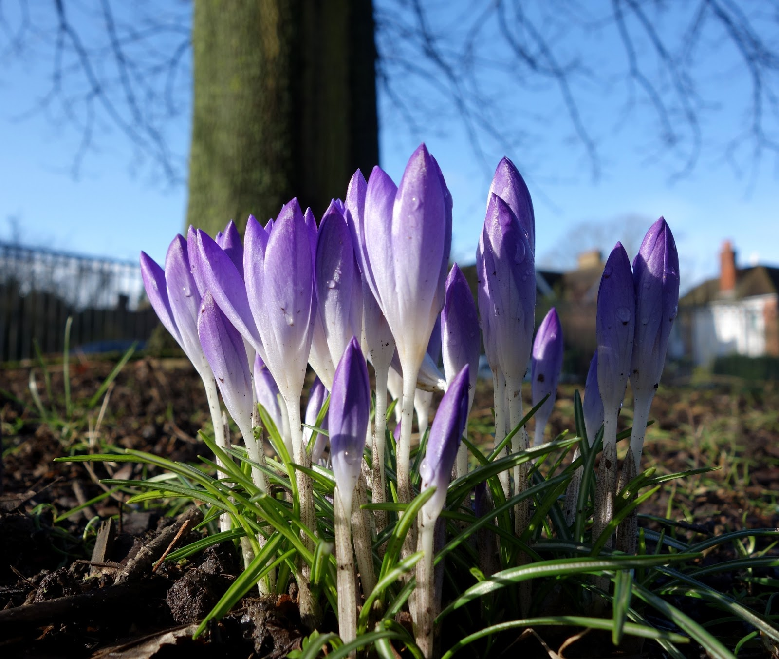 early spring flowers pictures - photo #4