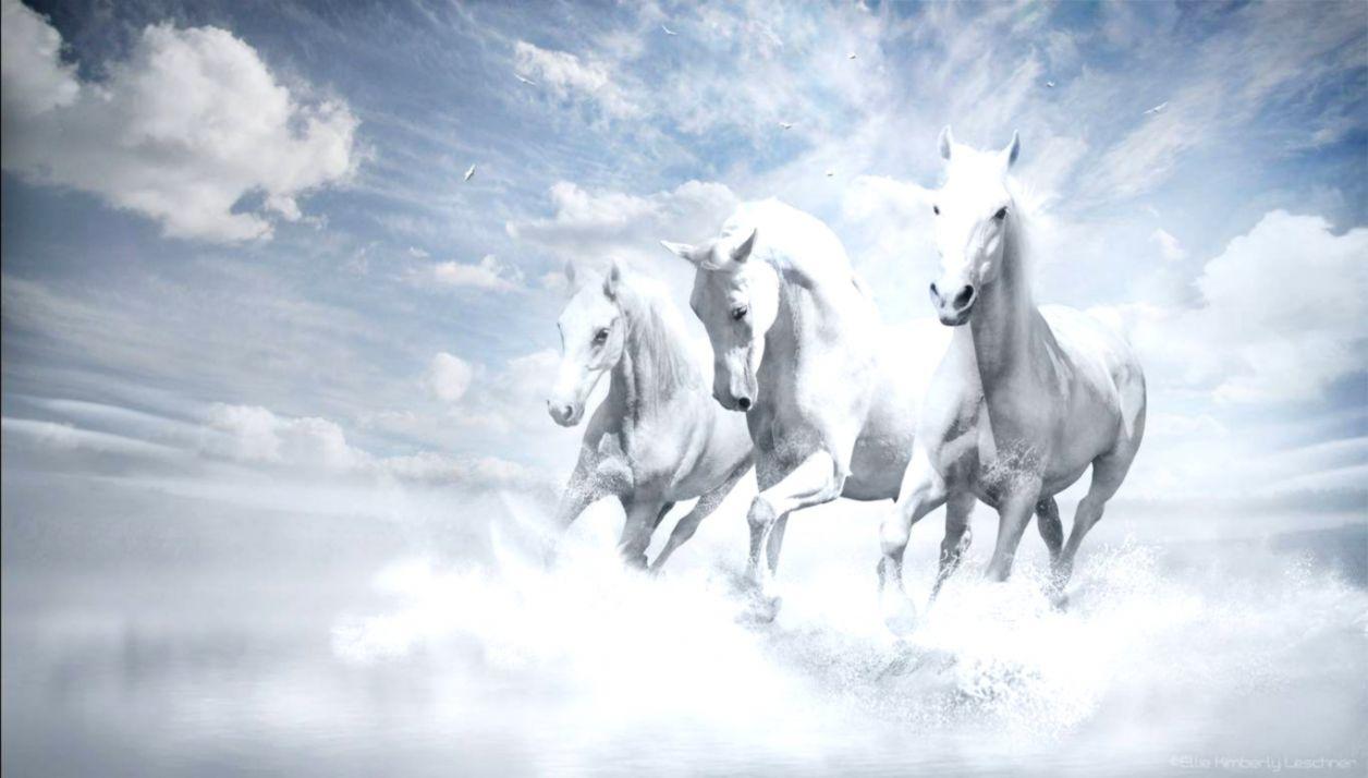 Popular   Wallpaper Horse High Definition - white-horse-wallpapers-wallpaper-cave  Trends_866480.jpg
