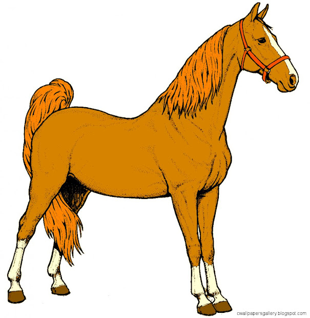 horse clipart wallpapers