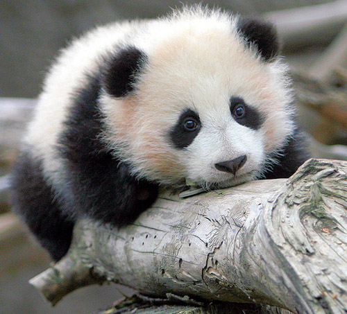 Baby You Re Amazing: Another Cute Baby Animal Pictures