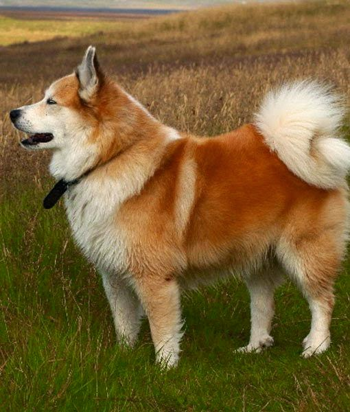 Top 5 Most Cute Dog Breeds