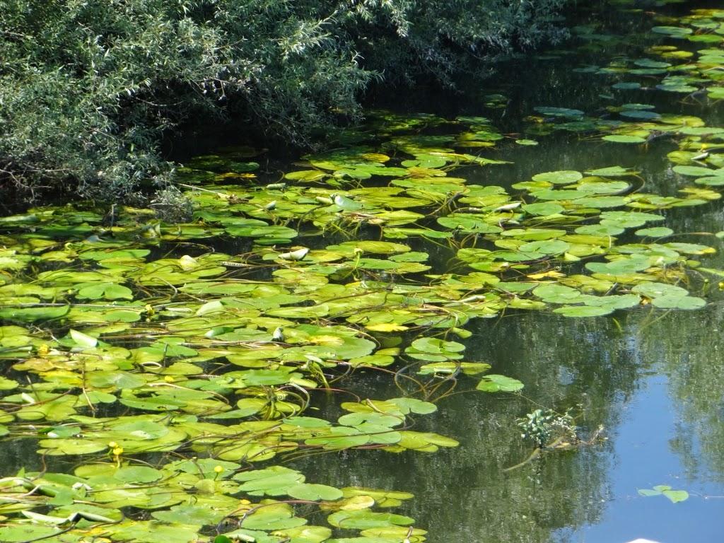 Jezioro Szkoderskie - Czarnogóra