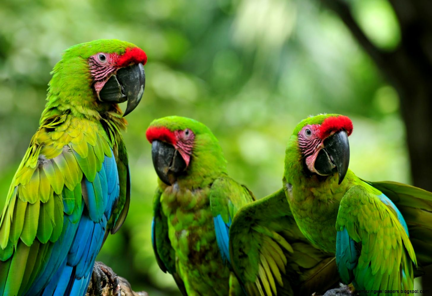 Pictures Of Animals In The Tropical Rainforest   HD Wallpapers and