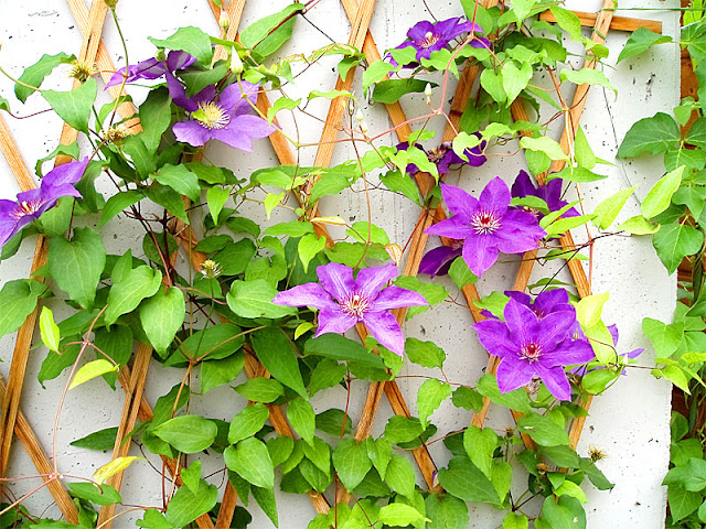 Add a Decorative Wall Trellis with Flowers