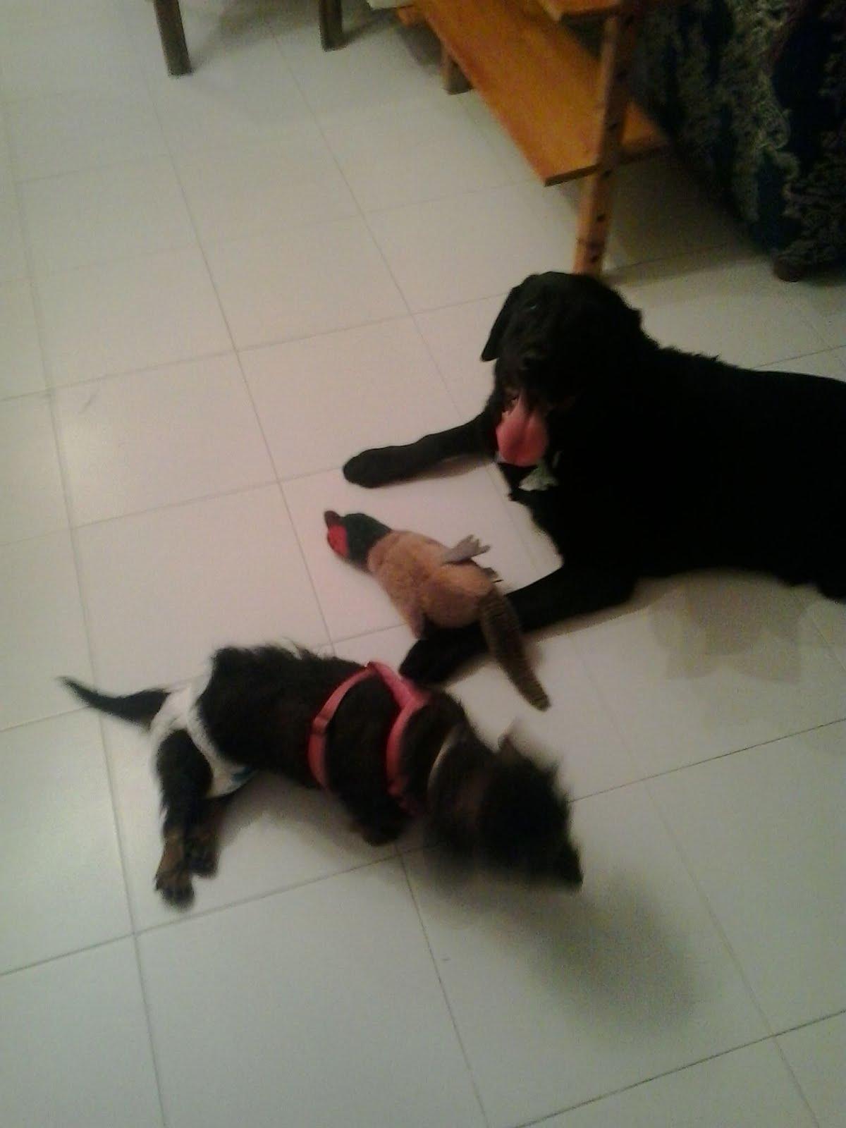 Tango y Zoa
