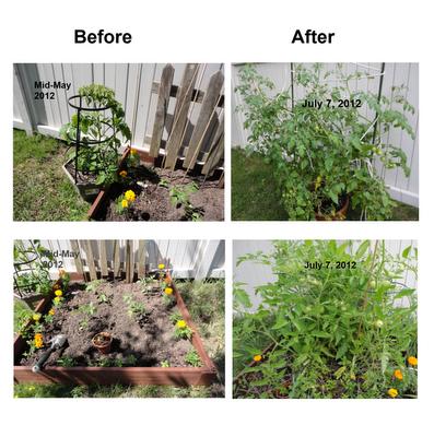 Gardenbeforeandafter