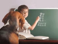 Le bien-être animal enseigné aux enfants