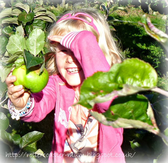 apple picking Blackmoor estate