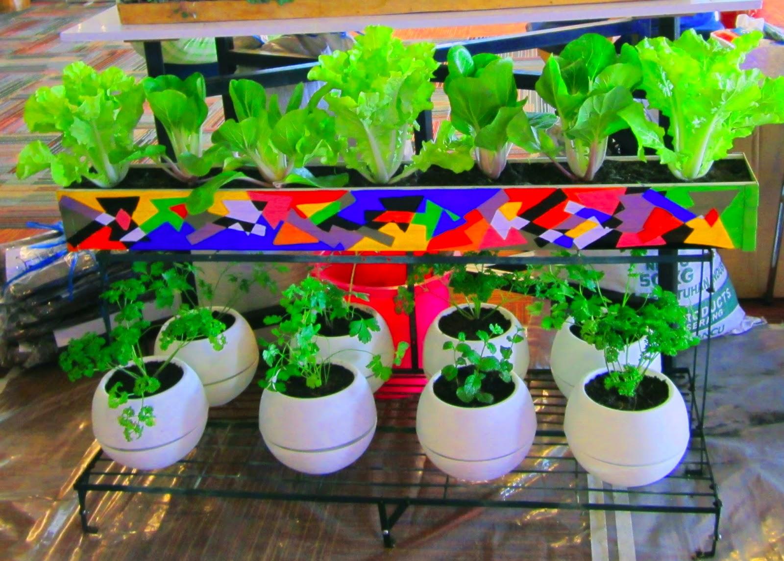 Cara Menanam Sayuran Dalam Pot