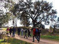 """La caminada passa a tocar del Pinell del Bosc. Autor: Francesc """"Caminaire"""""""