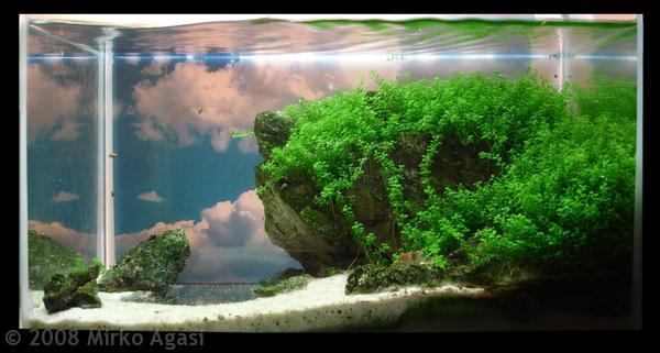 Tutorial Membuat Aquascape ~ centroaquascape